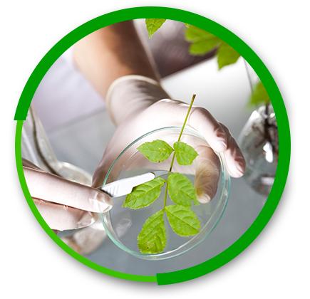 laborator-analize-mediu